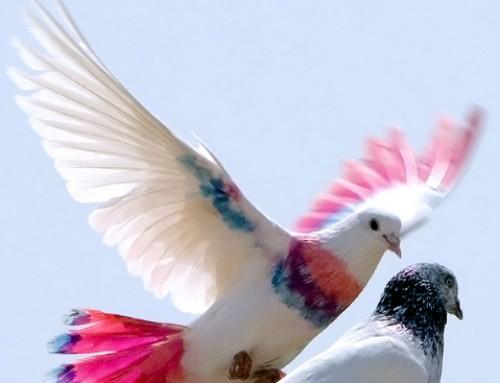 Suelta de palomas, un momento mágico en tu boda